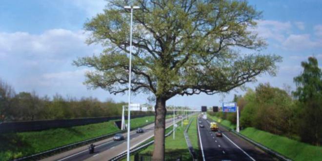 Како су Холанђани спасили храст на аутопуту? (видео)