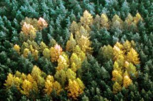 Зашто су немачке шуме пуне свастика?