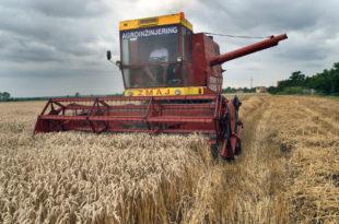 Почетак жетве пшенице, силоси у Тамнави (видео)