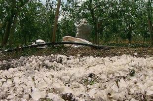 Шумадија: Рекордне приносе воћа уништио град 8