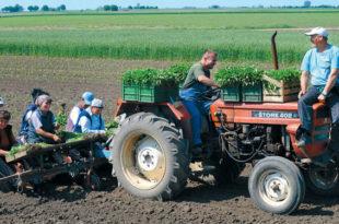 Последња фаза убијања српског аграра: Како је Србија поред своје хране постала зависник од увозног смећа