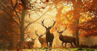 Предстоји нам топла јесен