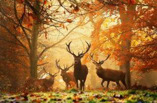 Данас почиње јесен 7