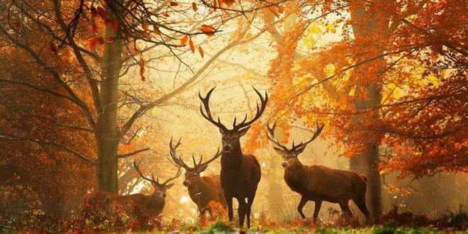 Данас почиње јесен 1