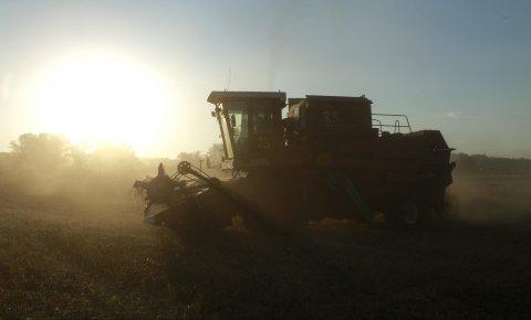 Колонизација Србије (2): Богатство од пшенице 1