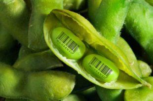 Хоће ли произвођачи ГМО соје у Србији бити кажњени?