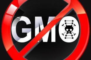 ПРОМЕНИ СЛИКУ НА СВОМ ПРОФИЛУ , АКО ПОДРЖАВАШ БОРБУ ПРОТИВ ГМО !