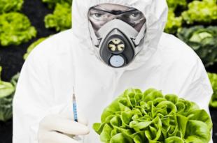 ГМО уцена