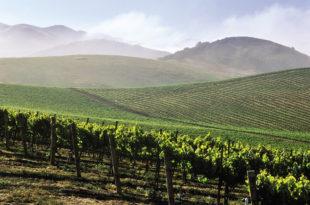 Субвенције за воћаре и виноградаре (видео) 4
