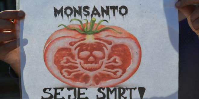 Директор Монсанта Зоран Петровић: Монсанто ће сејати ГМО у Славонији и Војводини!
