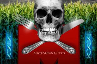 Шкотска забрањује узгајање генетски модификованих биљака
