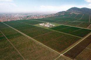 Поништити приватизацију Вршачких винограда