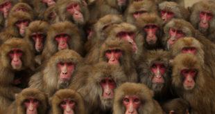 Чепурин: У политици као и свуда постоје мајмуни 2