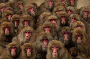 Чепурин: У политици као и свуда постоје мајмуни