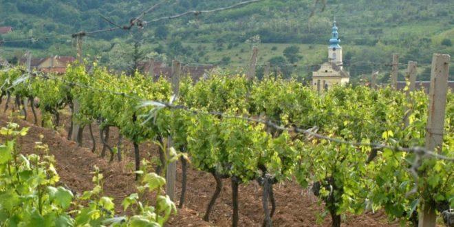 Динкић и УРС лопови умешани и у продају Вршачких винограда 1