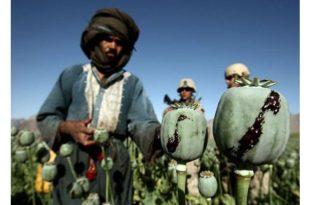 Производња хероина у Авганистану повећана 40 пута од доласка НАТО пакта