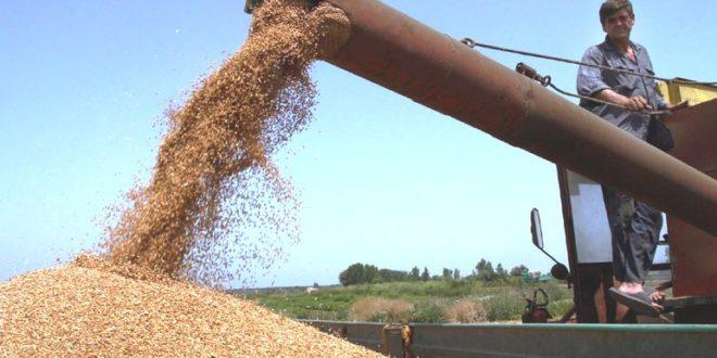 Србија: Увоз пшенице без царине на захтев млинара и кондитора