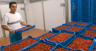 Руски трговински ланци договорили увоз хране из Србије