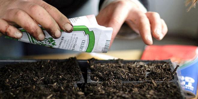 ЕУ забрањује садњу аутохтоних сорти семена чак и у баштама