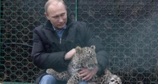 Путин ушао у кавез код леопарда (видео) 8