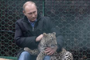 Путин ушао у кавез код леопарда (видео)