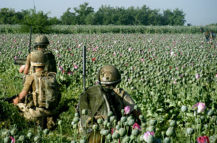 Под контролом НАТО-а цвета производња дроге у Авганистану