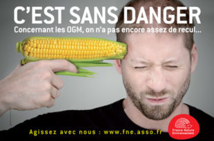 Француска декретом забранила сеjања ГMO кукуруза