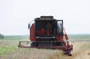 Киша обрала пшеницу и вишње