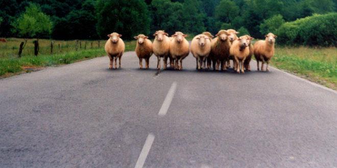 Ко су овце у Вучићевом тору?
