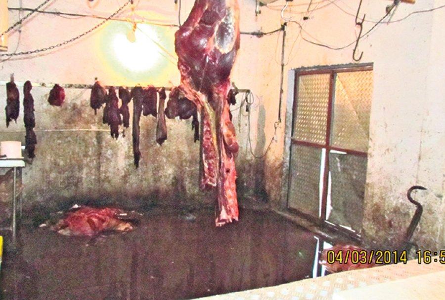 velika-plana-meso-uginuli-krava-konj-skola