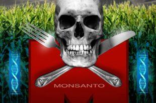 ГМО се тајно гаји највише у Мачви, Срему и Бачкој