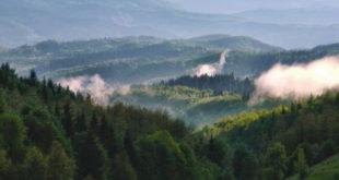 ОТИМАЧИНА: Србијашуме масовно секу шуме које су у процесу реституције! 12