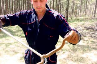 Погледајте како змијоловац излази на крај са најездом змија после поплава (видео) 5