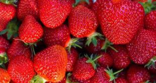 ОПРЕЗ! Увозне јагоде из Грчке препуне пестицида 12