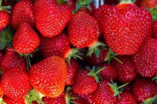 ОПРЕЗ! Увозне јагоде из Грчке препуне пестицида 4