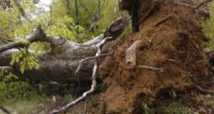 Торнадо код Лесковца! Носио кровове, чупао дрвеће (фото)