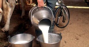 Од Нове године српско млеко и млекари без икакве заштите, увоз неограничен и без плаћања царине! 12