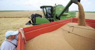 Завршена жетва: Пшенице мање него лане