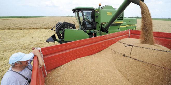 Завршена жетва: Пшенице мање него лане 1