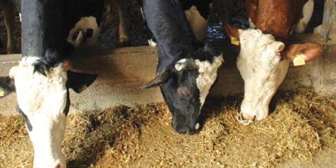 ОТРОВ: Министарство пољопривреде подигло границу за тешке метале у сточној храни која је пуна олова, арсена, живе, кадмијума