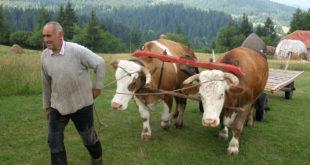 Србија још има здраву храну