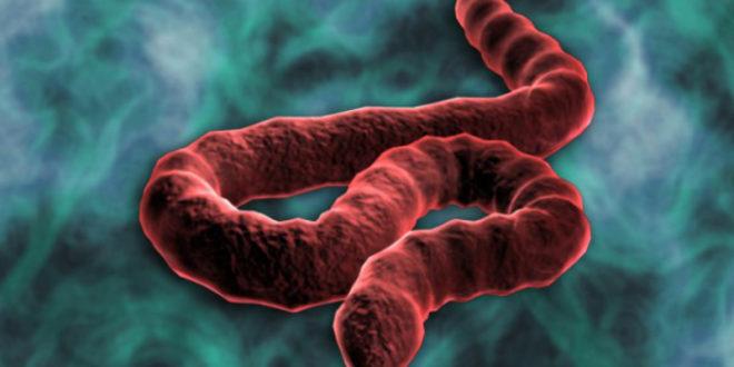 ОПАСНОСТ ПРЕД ВРАТИМА: Ебола за три недеље стиже у Француску, а онда у целу Европу