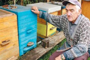 Модрича: Мистериозни нестанак пчела