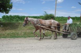 ЕУ РАЈ: Румуни се масовно исељавају у потрази за бољим животом 8