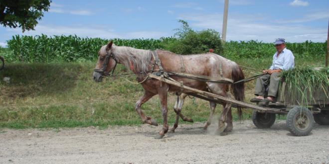 ЕУ РАЈ: Румуни се масовно исељавају у потрази за бољим животом 1