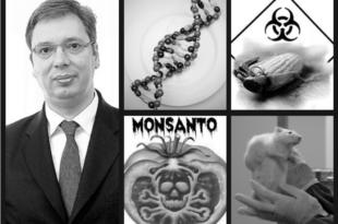 Вучићев режим поново почиње да гура закон о промету ГМО, бојкотујте председничког кандидата СНС због тога!