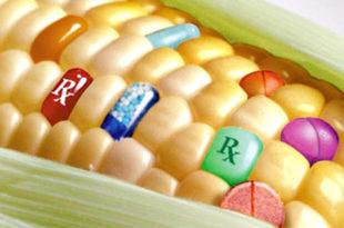 """Европа опет рекла """"не"""" ГМО-у"""