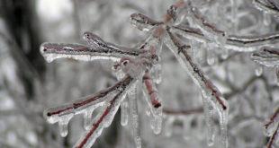 Лед оковао Бор, уништавао дрвеће и аутомобиле, Мајданпек без струје 12
