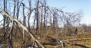 Лед уништио хиљаде хектара воћњака и шума, у источној Србији остала пустош 7