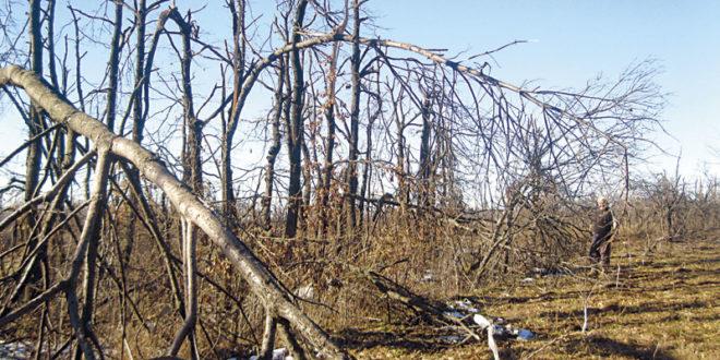 Лед уништио хиљаде хектара воћњака и шума, у источној Србији остала пустош 1